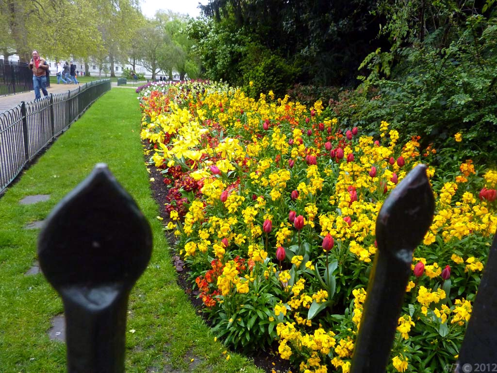 london_hide-park-flowers